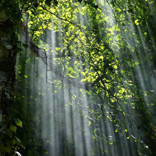 forest-light-nature-70365 (1)